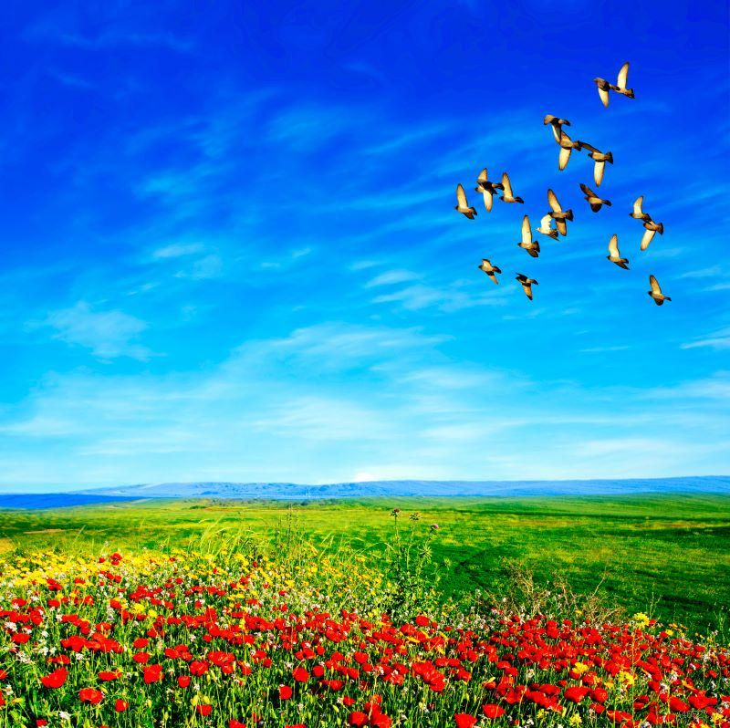 J Johannes M On Twitter Beautiful Bird Wallpaper Nature Birds Nature Birds in sky desktop wallpapers free