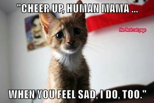 Pin By 41ronnielee Spirit5454 On All Things Animals Cute Cats And Kittens Cats Cute Cats