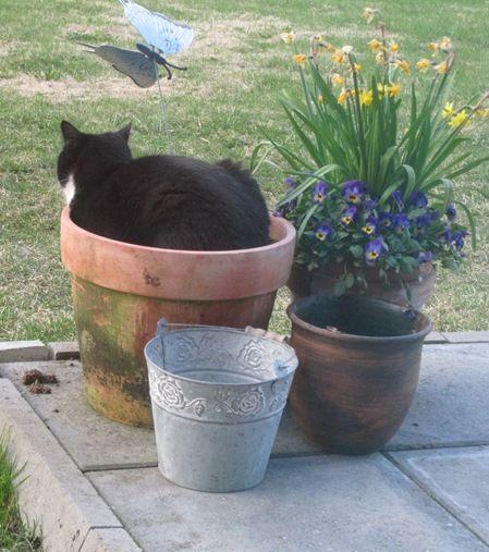 A cat in a pot.