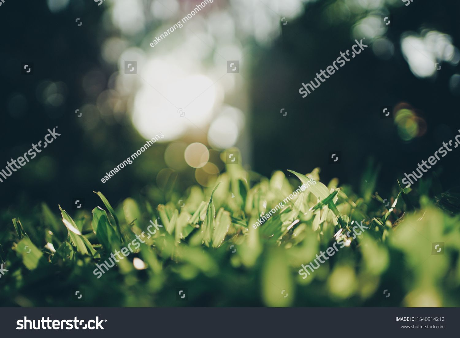 Closeup nature of green leaf on blurred greenery background in garden. Low key green nature leaf in garden. #Ad , #AFF, #green#leaf#Closeup#nature