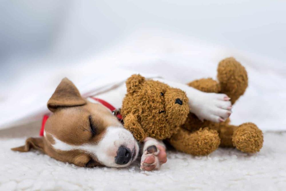 Dog sleep position reveals your dog's personality, sleep