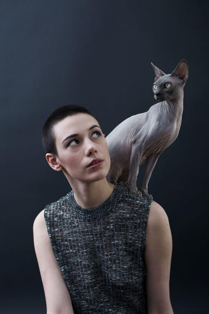 Epingle Sur Hommage Aux Chats Sphynx Par Alicia Rius
