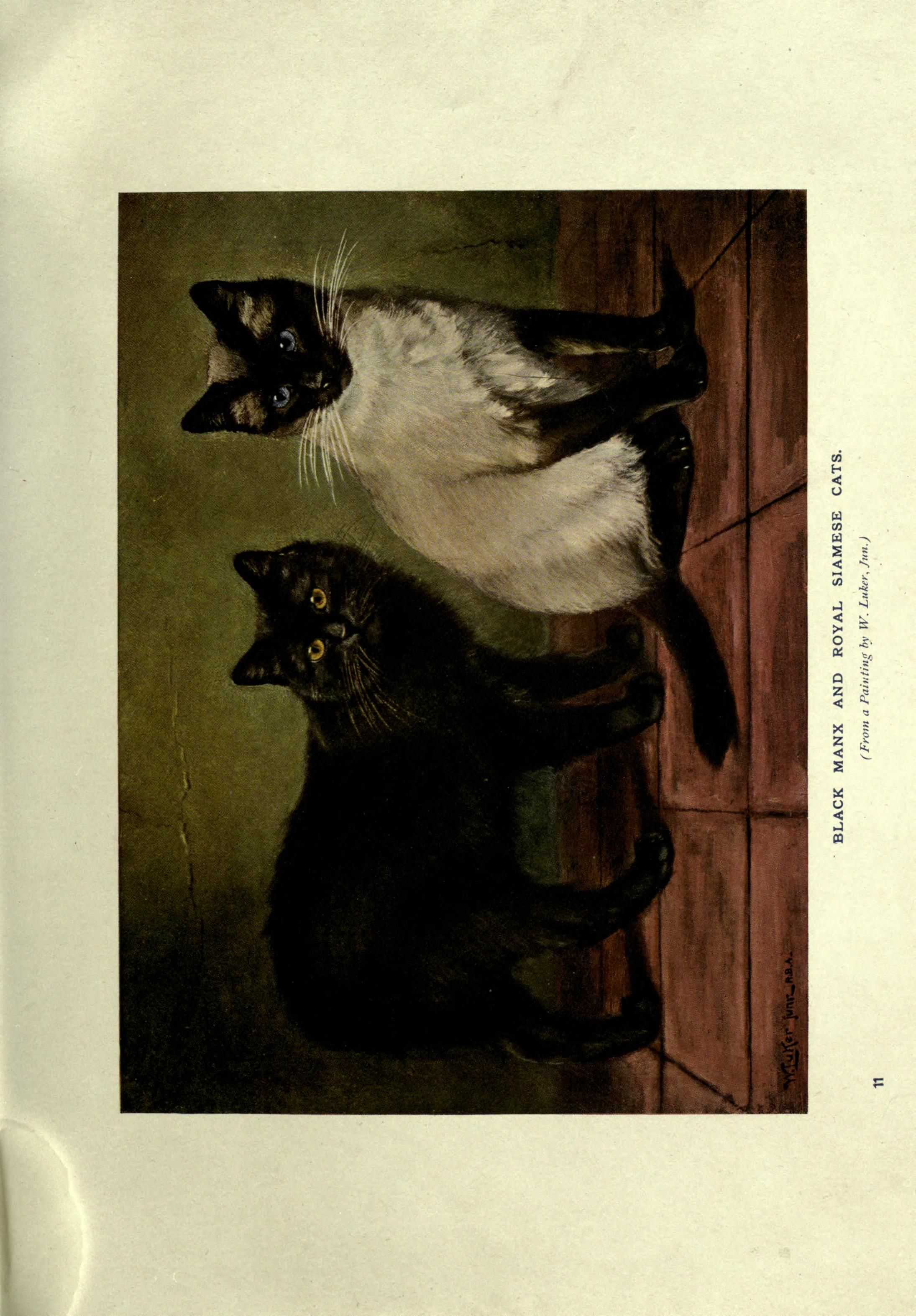 Siamese cats. The book of the cat London,Cassell and