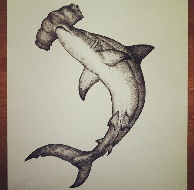 hammerhead drawing drawing art shark