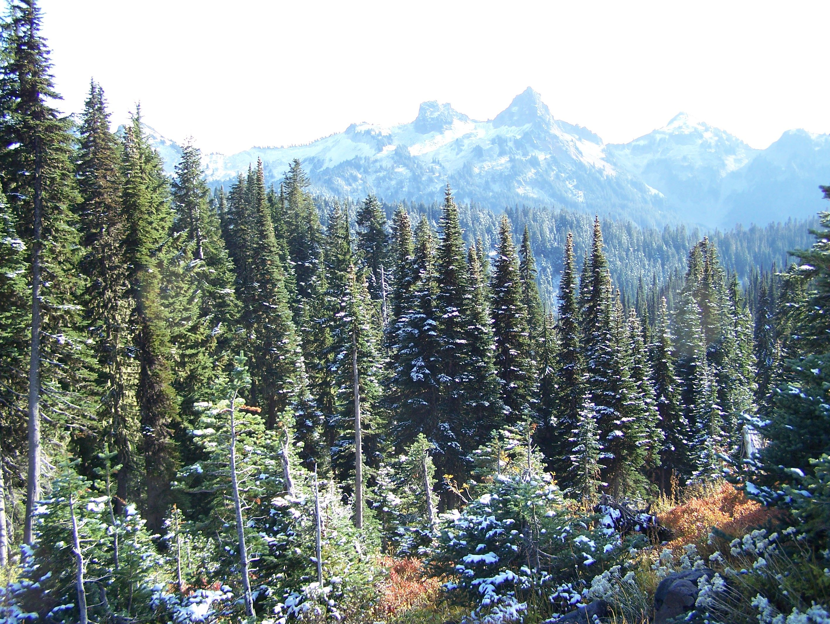 Snow in Paradise, Mt. Rainier - Washington