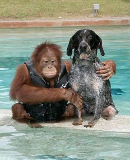 Image result for animals making friends