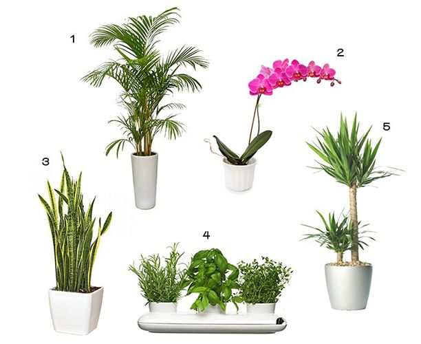 Best Indoor Plants | Plants, Gardens and Small garden spaces