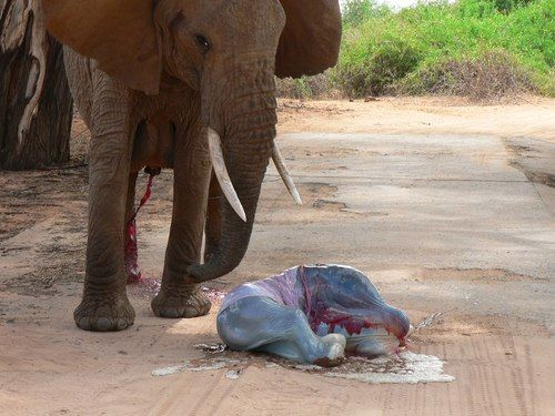 Pictures of newborn baby elephants