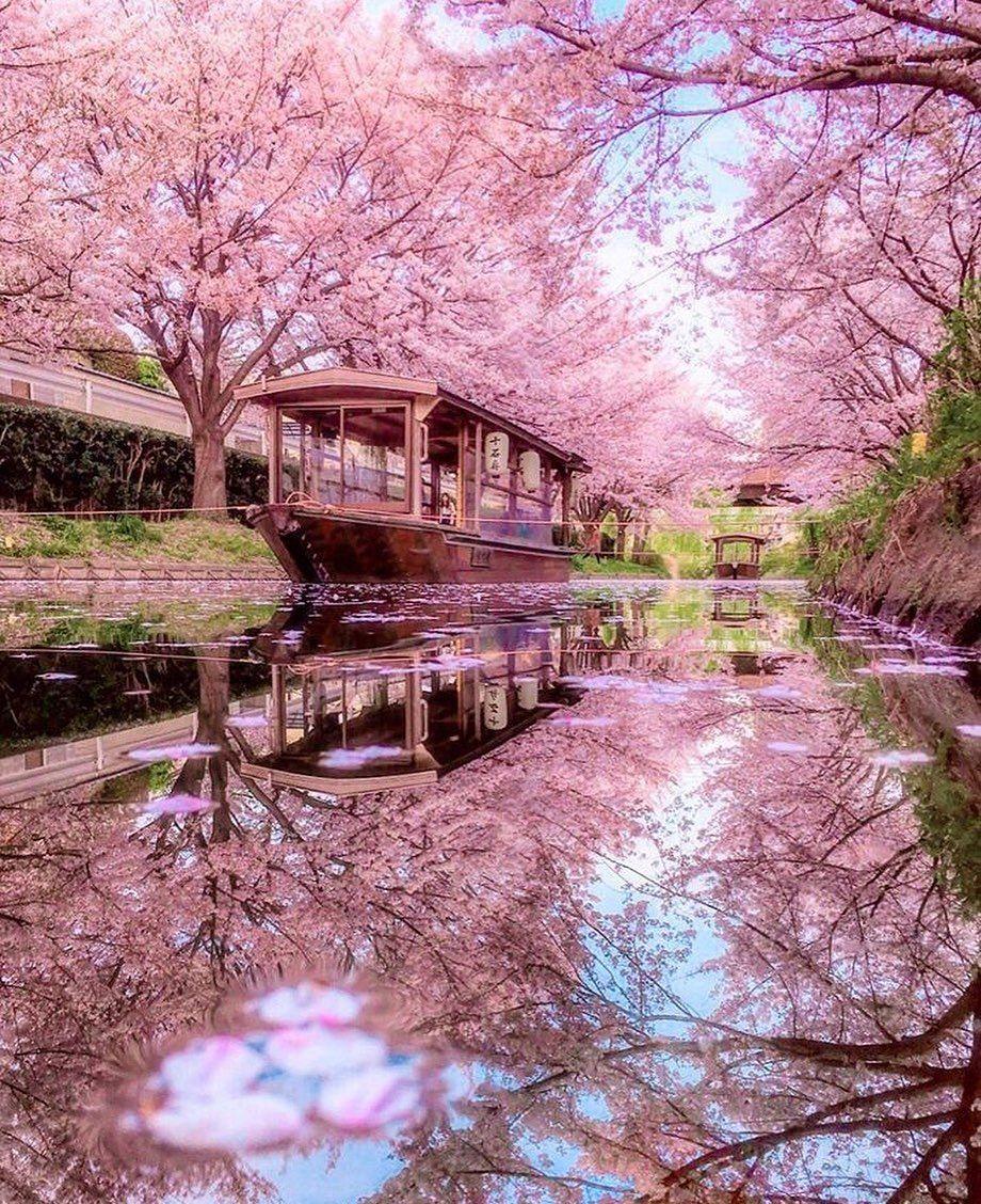 @RETRIP Nippon: 【RETRIP×京都】 本日ご紹介するのは、京都府にある「伏見十石舟」の様子です。例年3月下旬から4月上旬にかけて桜が見頃を迎えるこちらのスポットでは、川に映り...      #BestphotoJapan, #Instatravel, #Japan, #JapanDaytimeView, #Japantravelphoto, #Nippon, #Nipponpic, #PictureToKeep, #RETRIP, #RETRIPJapan, #RETRIPNippon, #RetripMs, #RetripNippon, #Travel, #Travelgram, #Travelholic, #Trip, #そうだ