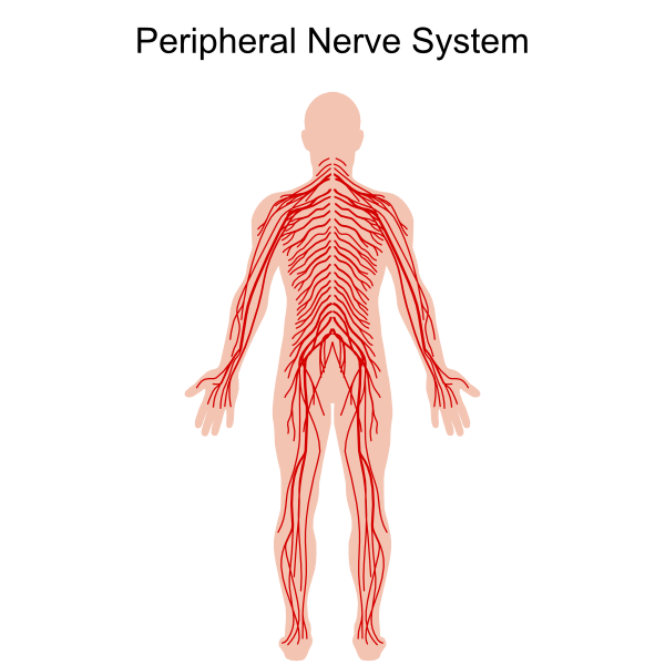 Pin On Skin Systems Group Physical Therapy Rehabilitation Medicine
