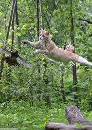 cats with with birds - Google Search