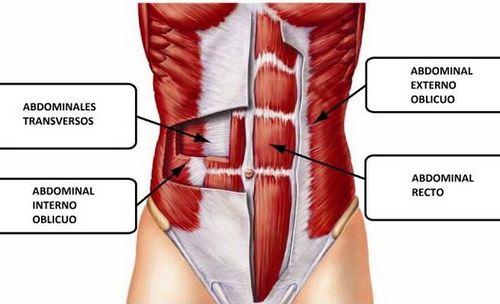 musculo transverso | Ejercicio | Pinterest