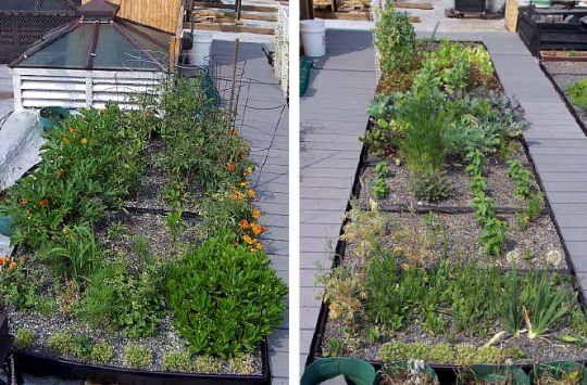 How To Start A Green Roof Garden