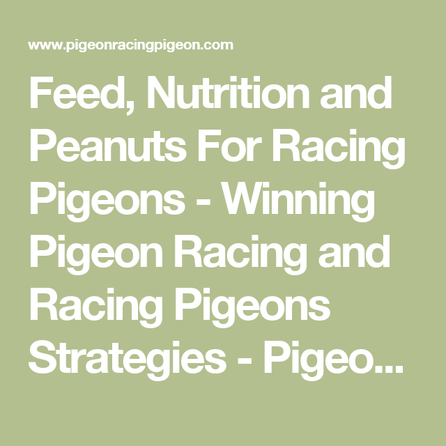 Feed Nutrition And Peanuts For Racing Pigeons Racing Pigeons