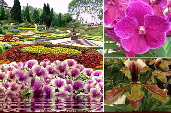 Chiang Rai Tourist Attractions and places to visit from botanical