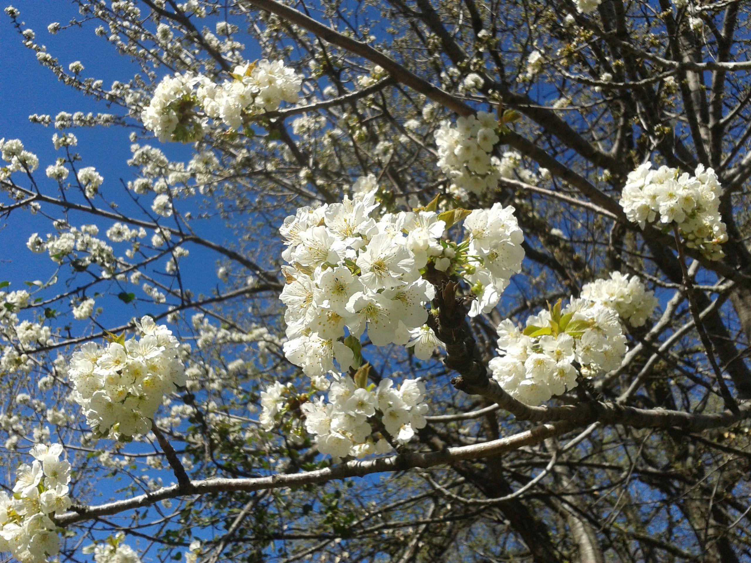 286626a399d7d747138aea812c2804da Luxe De Fleurs De Jardin Des Idées