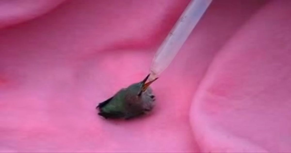 A Teen Rescues A Baby Hummingbird And Nurses Her Back To ...