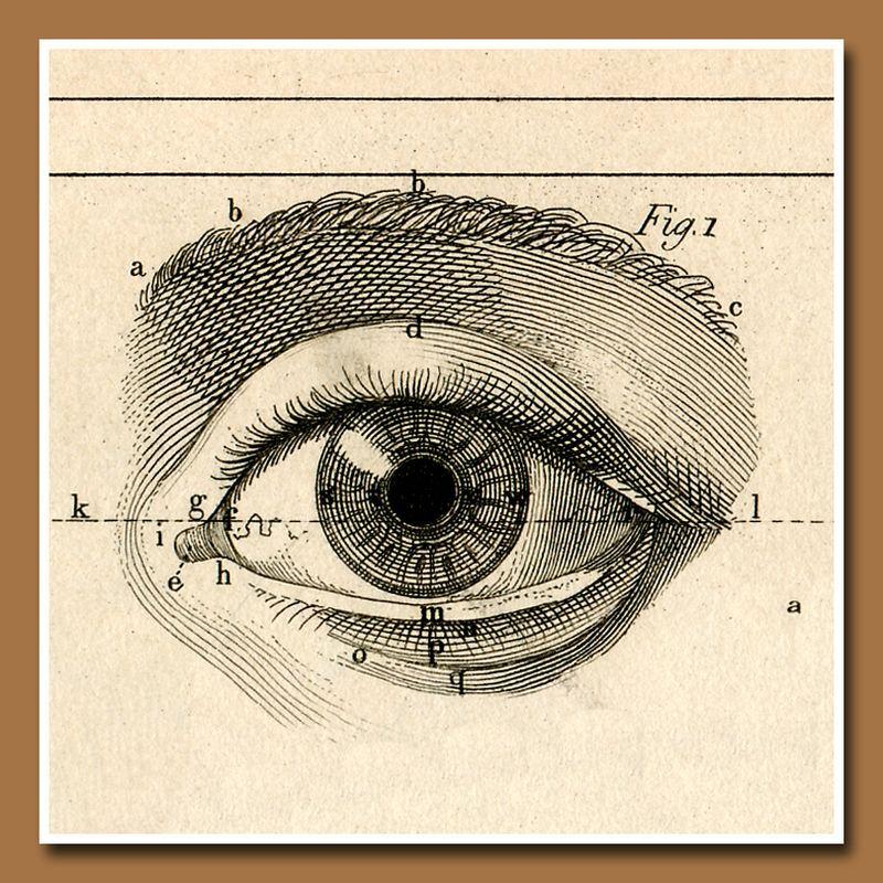 Vintage British Prosthetic Eyes