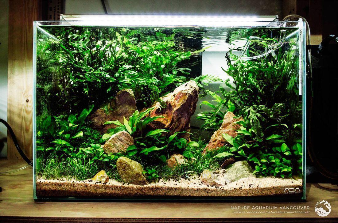 45 Relaxing Aquascaping Ideas You Will Totally Love In 2020 Aquarium Design Amazing Aquariums Tropical Fish Aquarium