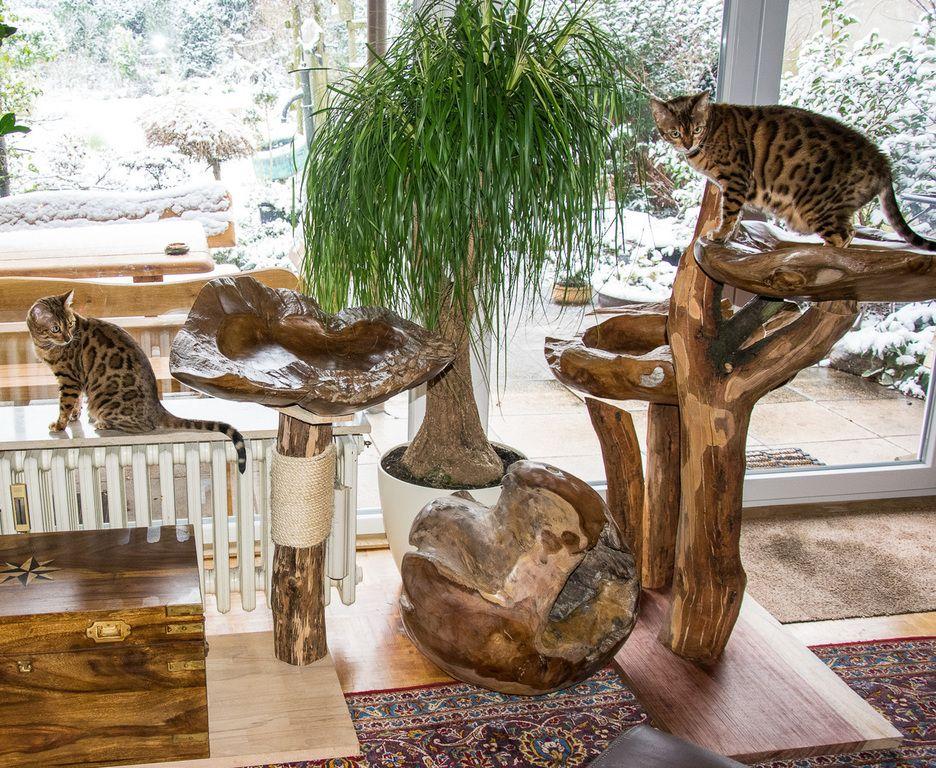 bildergebnis f r kratzbaum selbstgemacht kratzbaumideen baum kratzbaum und selbstgemacht. Black Bedroom Furniture Sets. Home Design Ideas