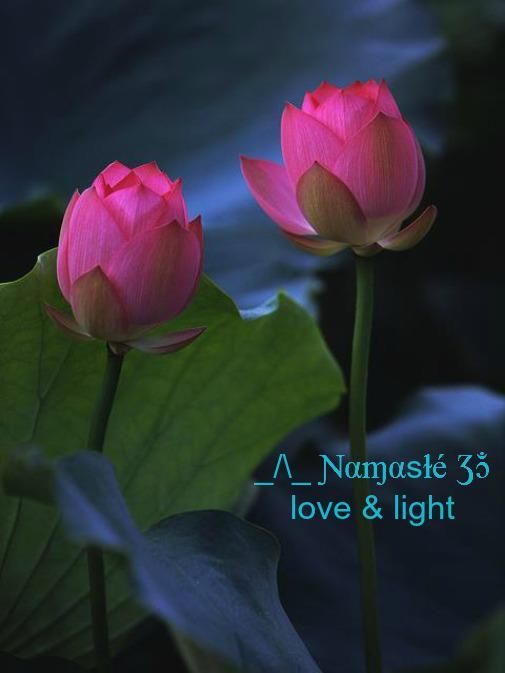 Namaste...Love & Light...Lotus Flower