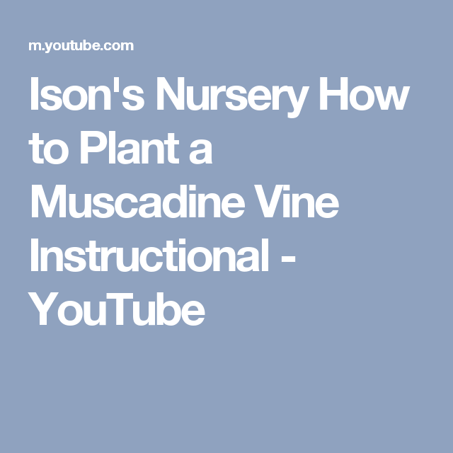 Ison's Nursery How to Plant a Muscadine Vine Instructional - YouTube