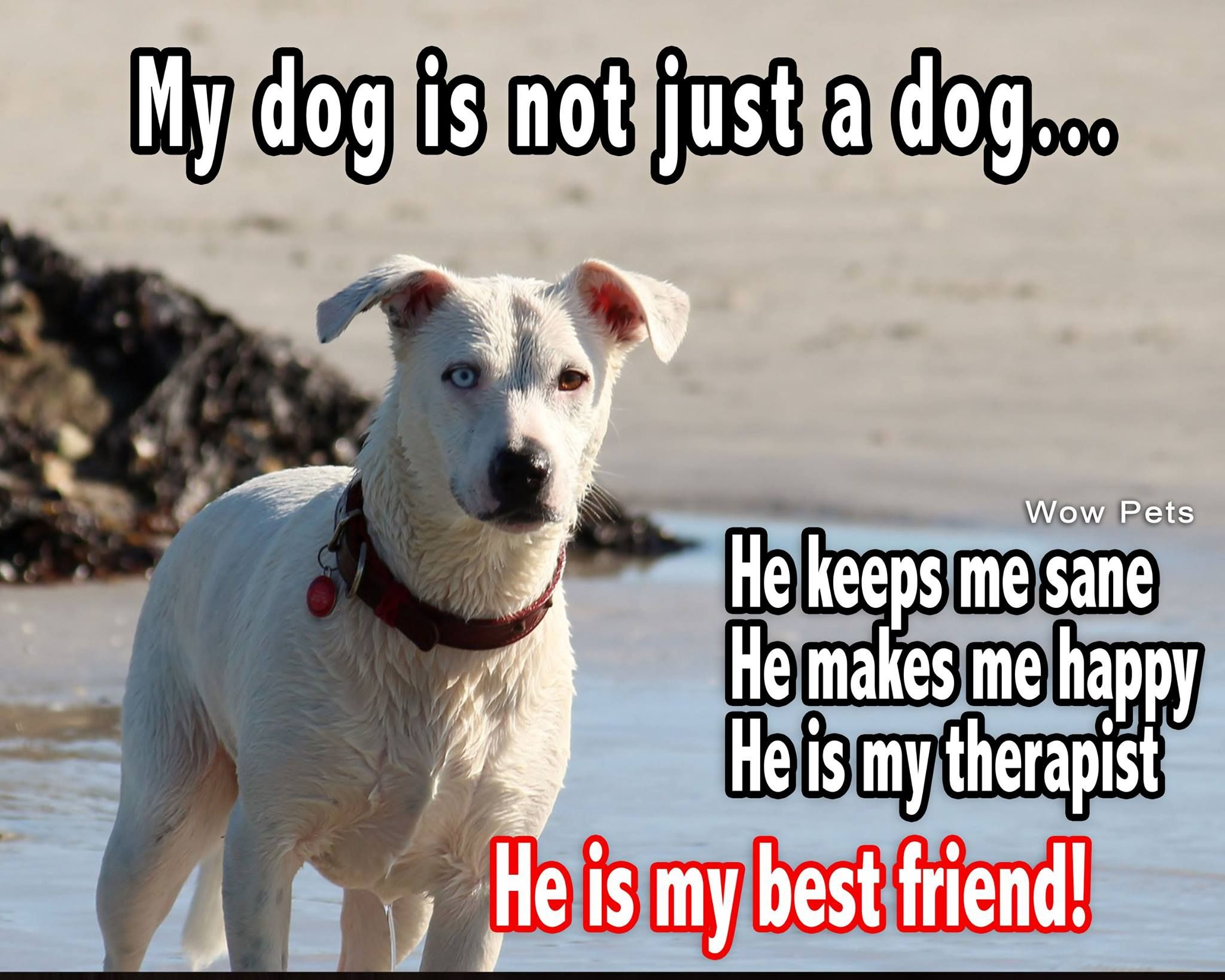 Dog Best Friend Quotes My Dog Is Not Just A Dog He Is My Best Friend | Animal Quotes  Dog Best Friend Quotes