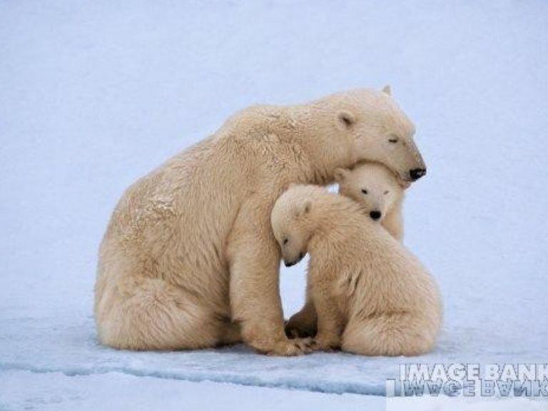 animal dads | maternidad-paternidad-animal-y-humana-26497-thumbnail-4.jpg?cb ...