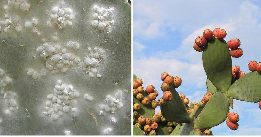 plagas y de los cactus cuidado con su salud