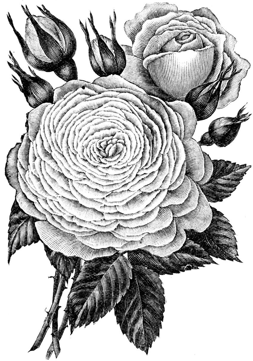 flower10.dtt.jpg 847×1,210픽셀