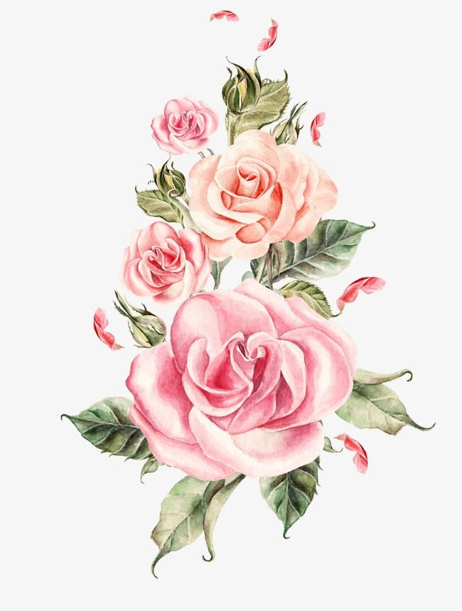 Hand Painted Pink Roses Bouquet Hand Painted Watercolor Hand Painted Floral Material Png And Vector With Transparent Background For Free Download Flores Acuarela Pintura De Flores En Acrilico Rosas Pintadas