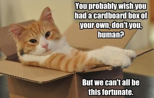 Silly Cat Chillin In A Cardboard Box