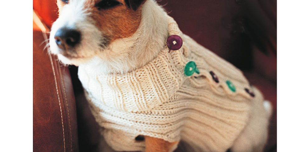 Give Rover a Makeover: Knit a Dog Jumper | Dog jumpers, Crochet and ...