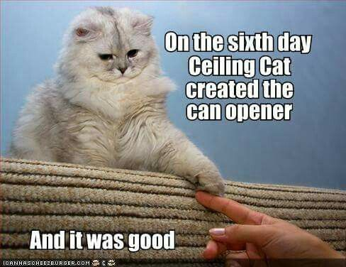 Pin by Sara Smith on Basement Cat and Ceiling Cat Cats