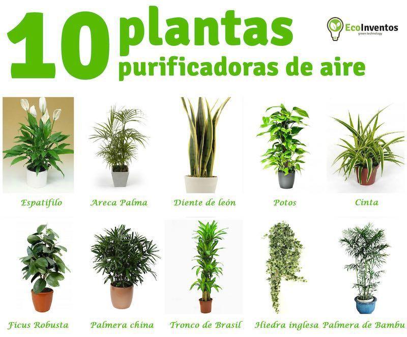 10 plantas que purifican el aire de tu casa invernadero - Clase de flores y sus nombres ...