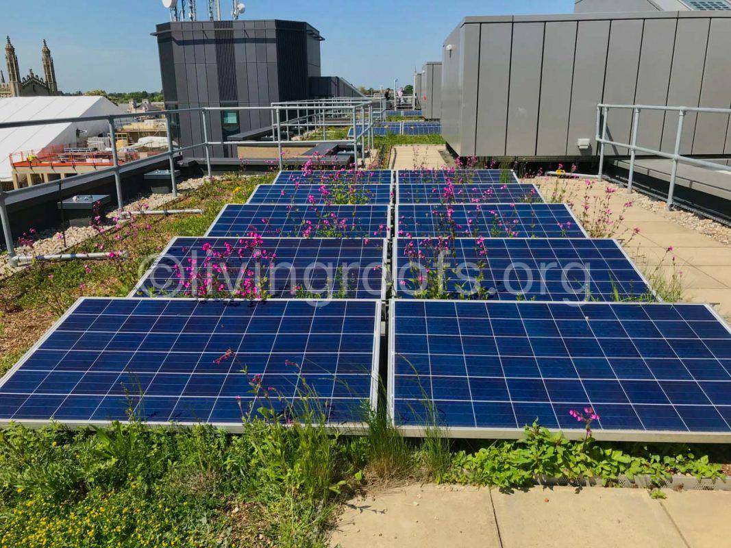 David Attenborough Building biodiverse solar green roof