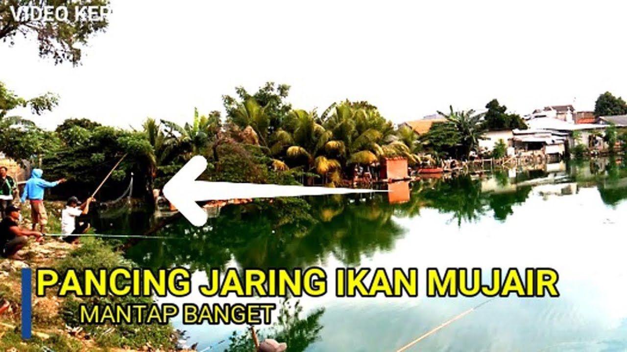 Teknik Pancing Jaring Ikan Mujair Tawes Mantap Pancing Teknik