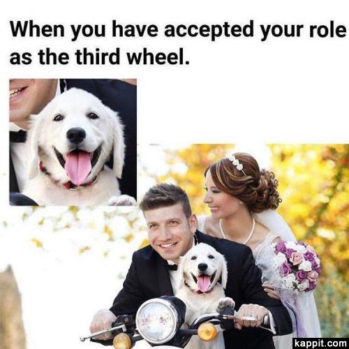 When you have accepted your role as the third wheel.