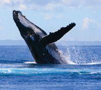 Hawaii Whale Watching #Maui #Whales