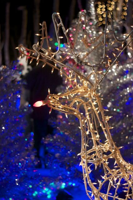 Get $10 Discount Tickets To L.A. Zoo Lights Taking Place Every Night,  November 27 U2013