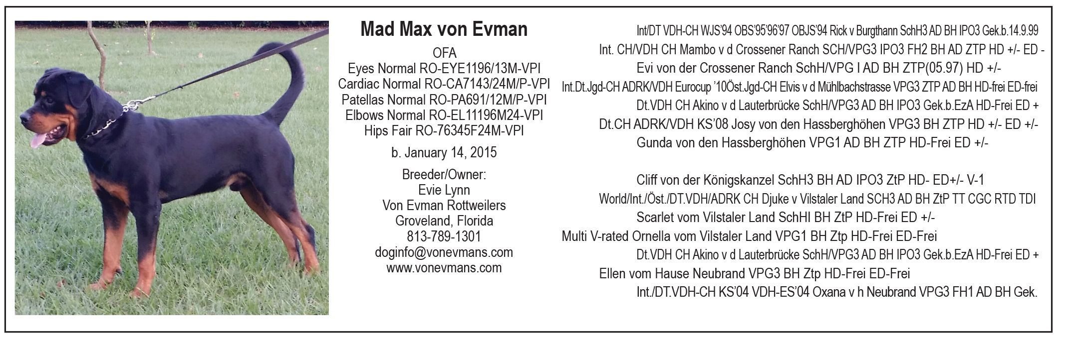 Available At Stud Mad Max Von Evman Ofa Eyes Normal Cardiac Normal