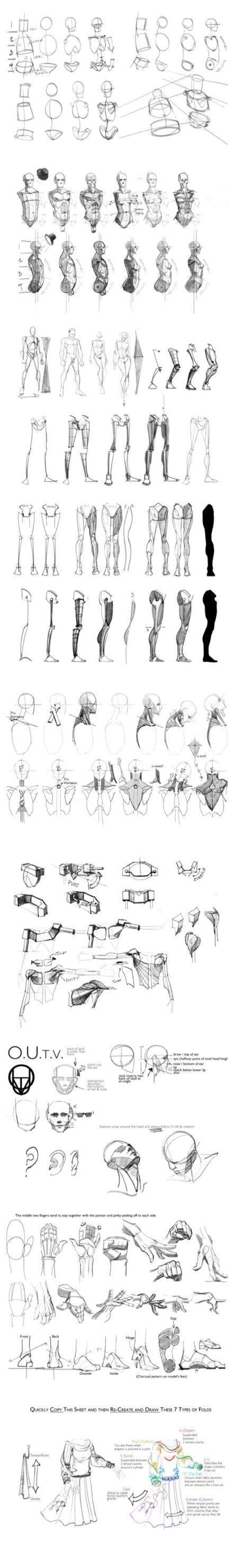 sigueme | Anatomy | Pinterest | Anatomy, Draw and Sketches
