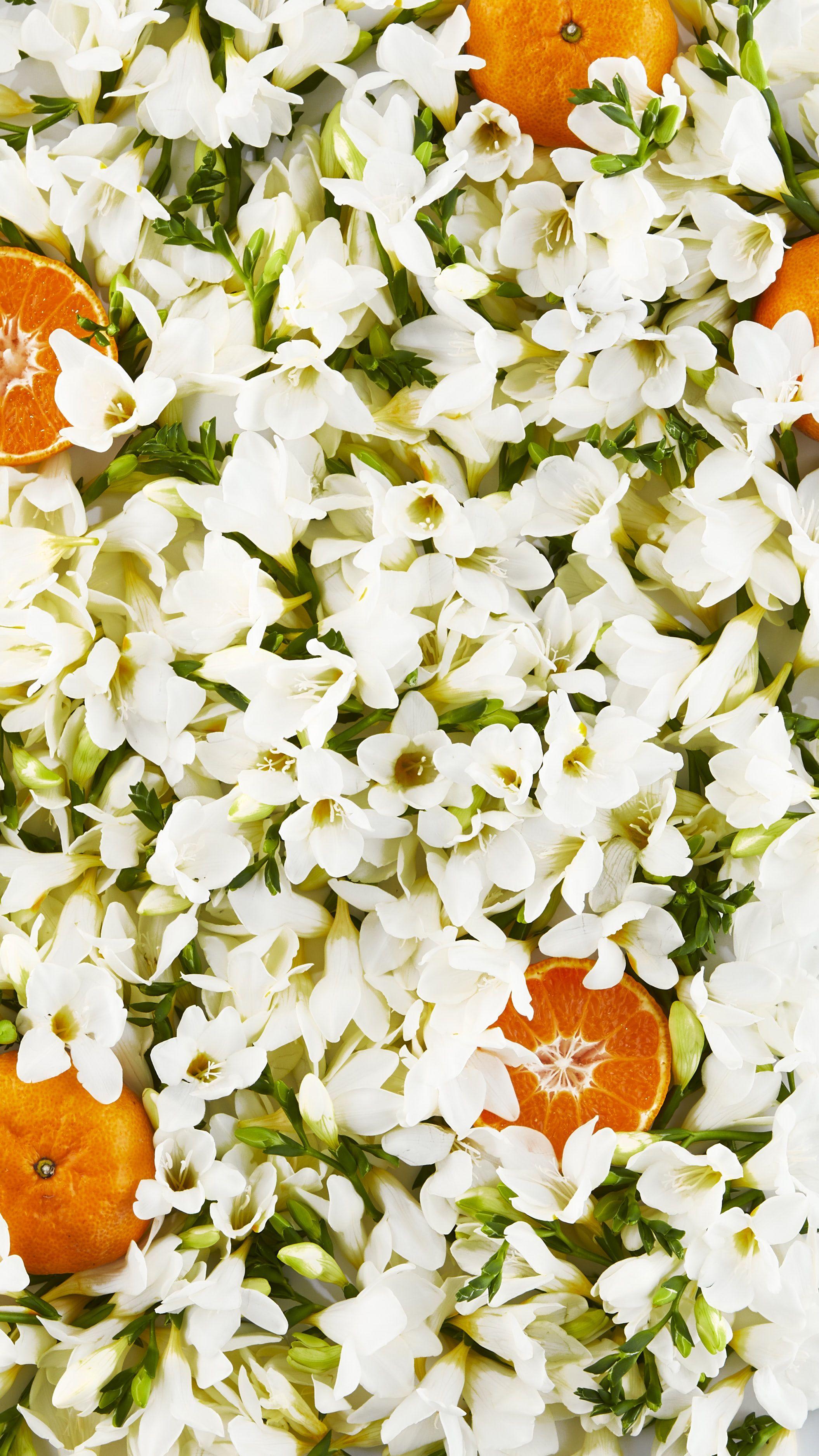 Freesia Clementine Iphone Wallpaper Wallpaper Iphone Wallpaper Wallpaper Backgrounds