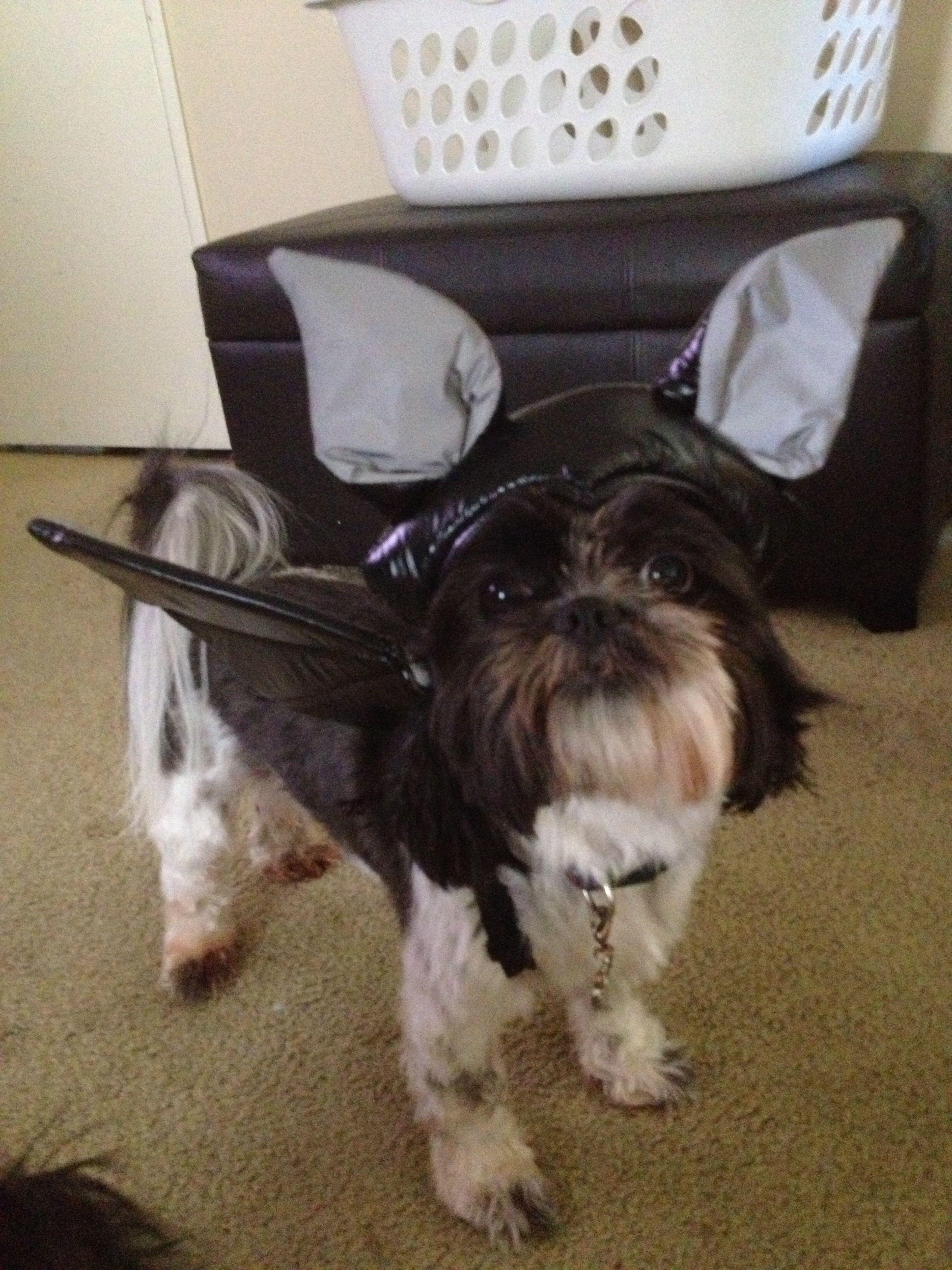 Private bat dog lol!