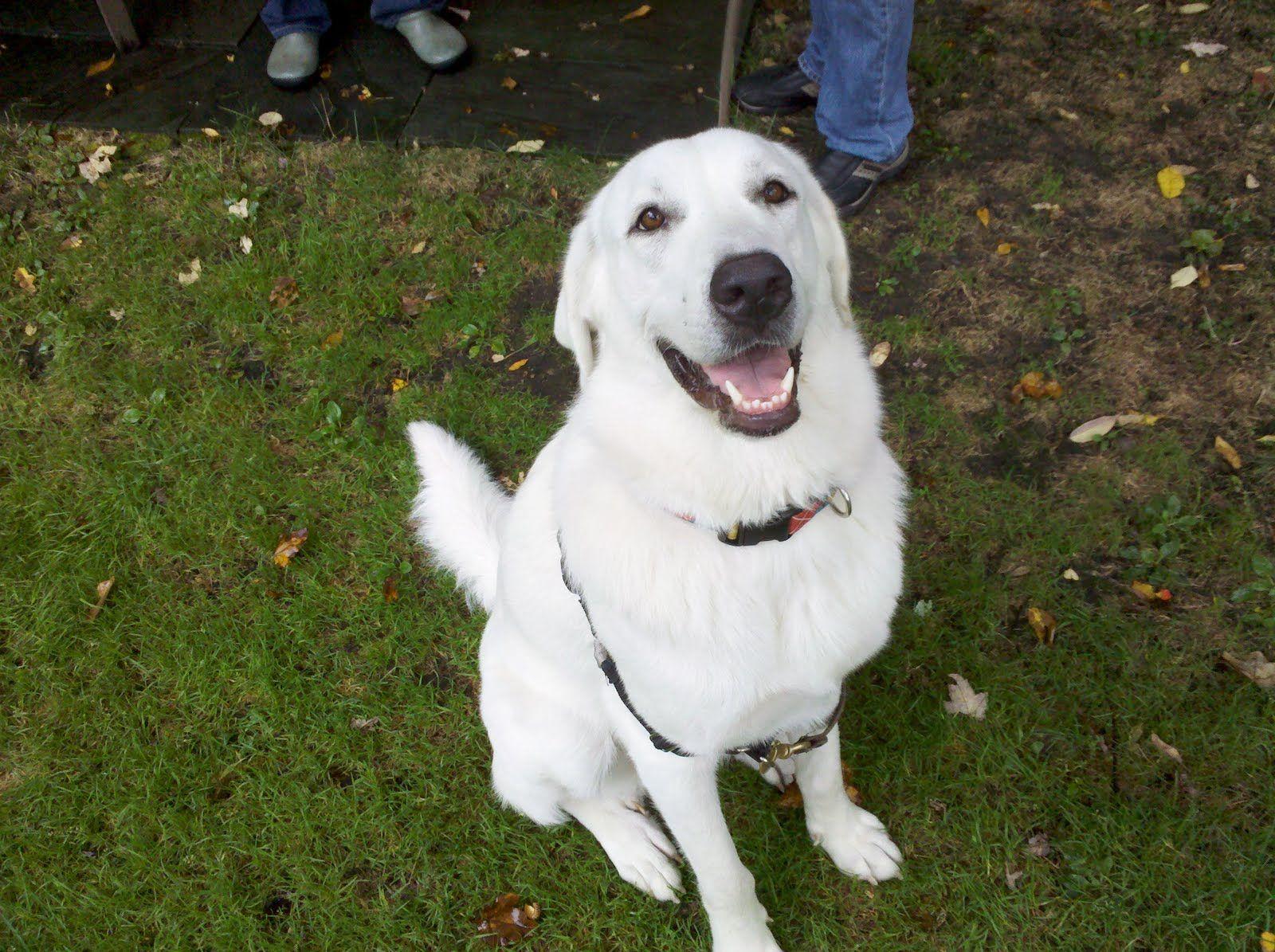 Great Pryness Dog Photo Zen Dog Training Blog Juliet The Great