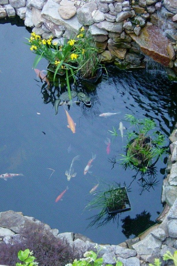 Create A Garden To Remember With This Useful Advice | Koi ...