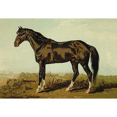 Buyenlarge Dongola Horse By Samuel Sidney Painting Print Horses Horse Posters Horse Painting