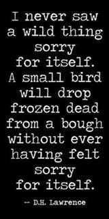 Dh Lawrence Self Pity Great Poem Always Reminds Me To