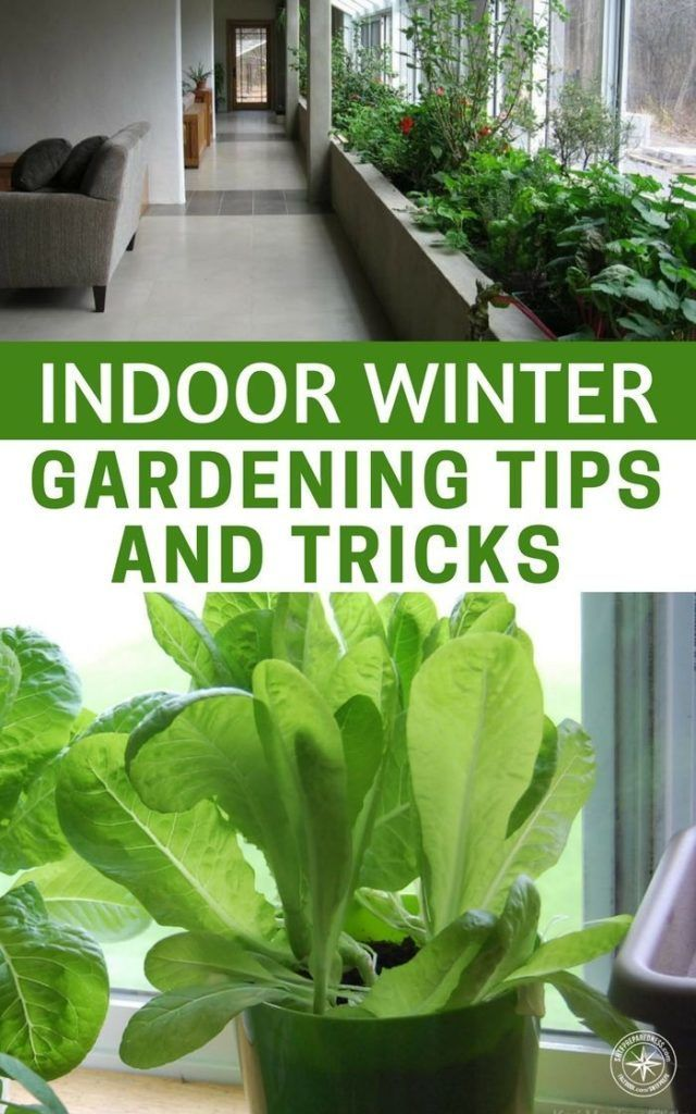 Indoor Winter Gardening Tips and Tricks A Must Have In Case The SHTF #wintergardening