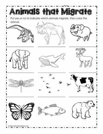 Free Hibernation Worksheets For Kindergarten